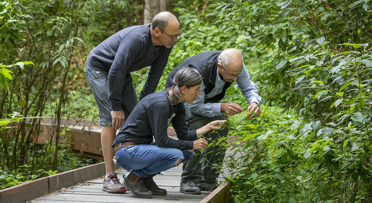 Mike Halperin, Jodi Green, and Walt Halperin looking at a plant along a trail.