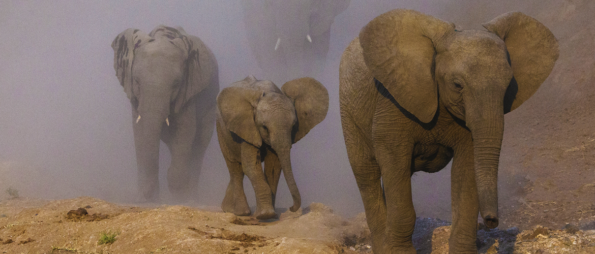 Elephant DNA research